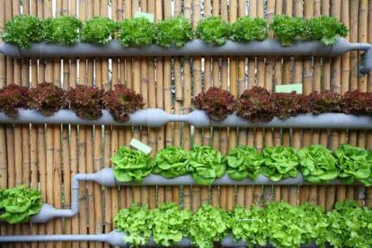 cultivo plantas huerto vertical