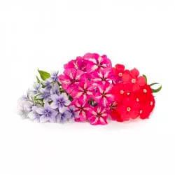 mini jardinera de flores colores