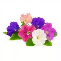 mini jardinera de petunias