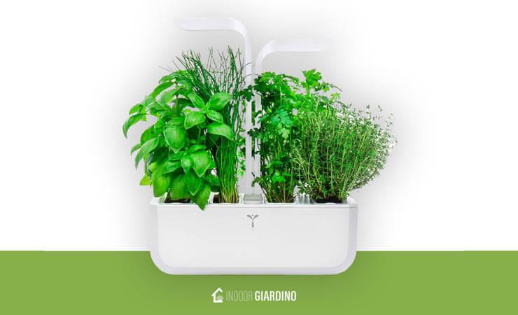 cultivar un sencillo jardín en casa medio